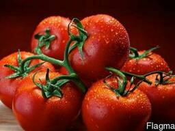 Tomatoes Spain