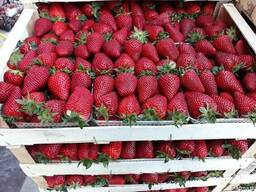 Fresh strawberries - photo 3
