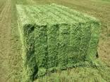Top quality alfalfa bales - photo 1