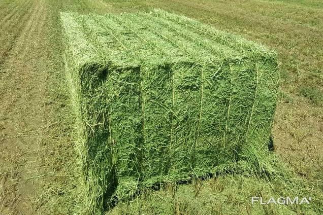 Top quality alfalfa bales