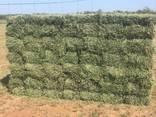 Top quality alfalfa bales - photo 2